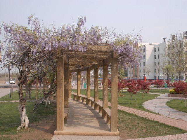 院--校园风景图片